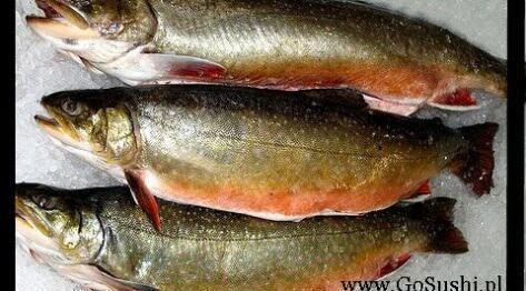 Ryba na sushi, gdzie i jaką rybę kupić