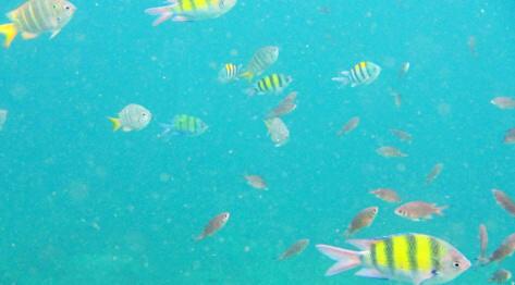 Phuket, Tajlandia – Wędkowanie na Phuket, czyli pseudo wędkarska wyprawa na tuńczyki, snappery i snorkling