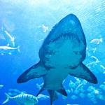 Kuala Lumpur, Malezja –  Oceanarium Kuala Lumpur Aquaria, urodziny Mahometa, świątynie Batu Caves