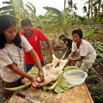 Bantayan, Filipiny – tradycyjny pieczony prosiak lechon baboy cebuano i dyskoteka z okazji fiesty w Tingtingon w Marikabanie
