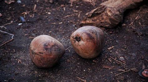Mleczko prosto od kokosa