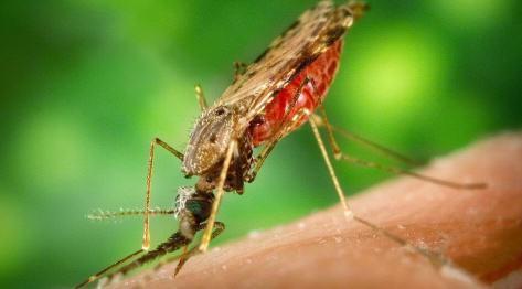 Azja i komary. Choroby tropikalne malaria i denga – zasięg, profilaktyka, objawy i leczenie. Informacje praktyczne jak chronić się przed komarami oraz jak uniknąć zakażenia i minimalizować ryzyko zachorowania