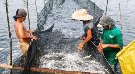 Filipiny, Bantayan – Gospodarstwo rybackie pod Santa Fe. Bangus – Narodowa Ryba Filipin i słonowodne stawy hodowlane