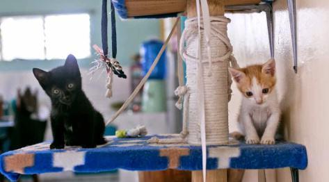 Zawisza i Brat Henryk – najfajniejsze kotki na świecie – filmik i kilka zdjęć z dwóch pierwszych miesięcy :-)